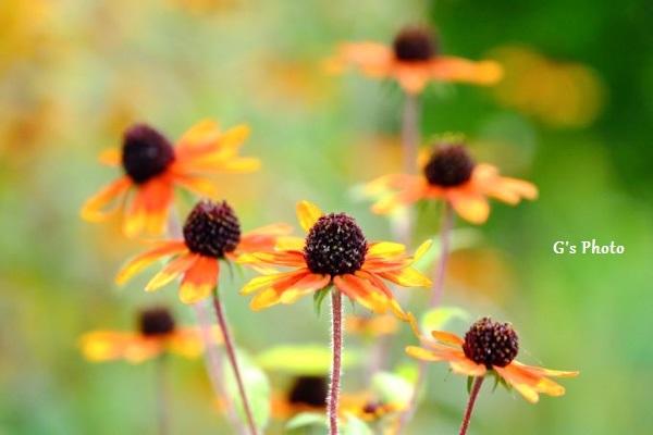 夏の花220200731