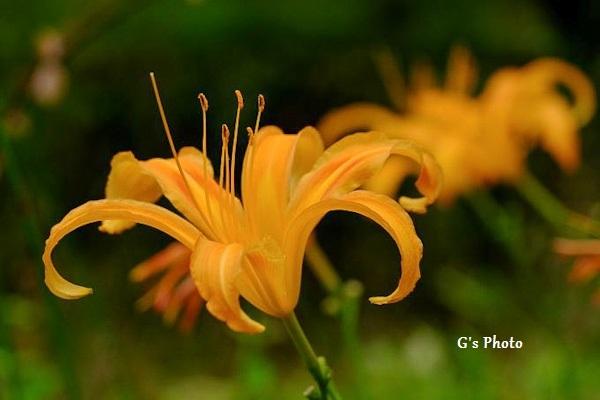 夏の花320200731