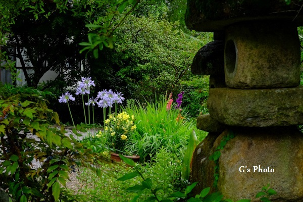 秘密の花園20200701