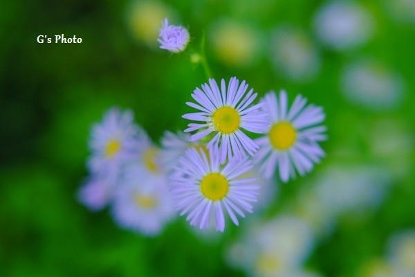 7月の花120200719