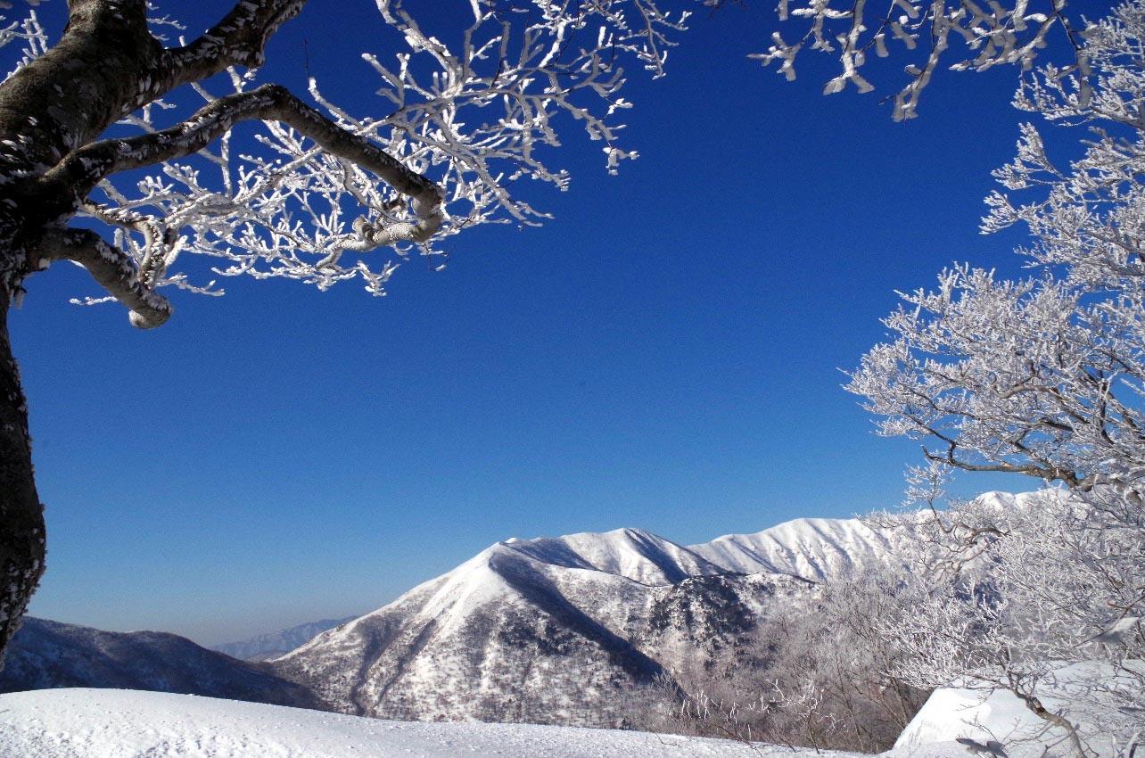 樹氷と山々
