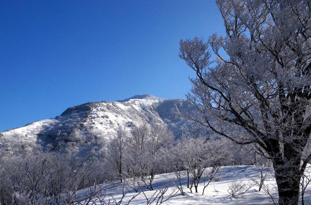 樹氷の旭岳