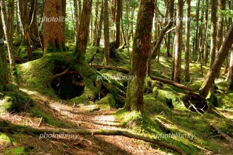 6176019 苔の森
