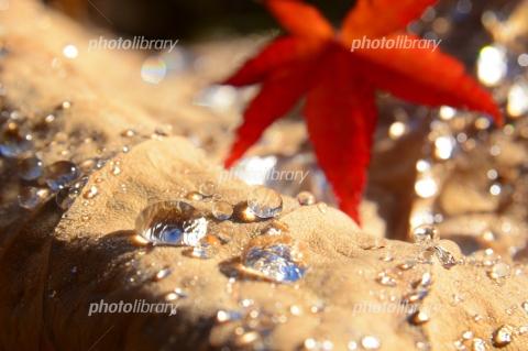 6551066 水滴と紅葉