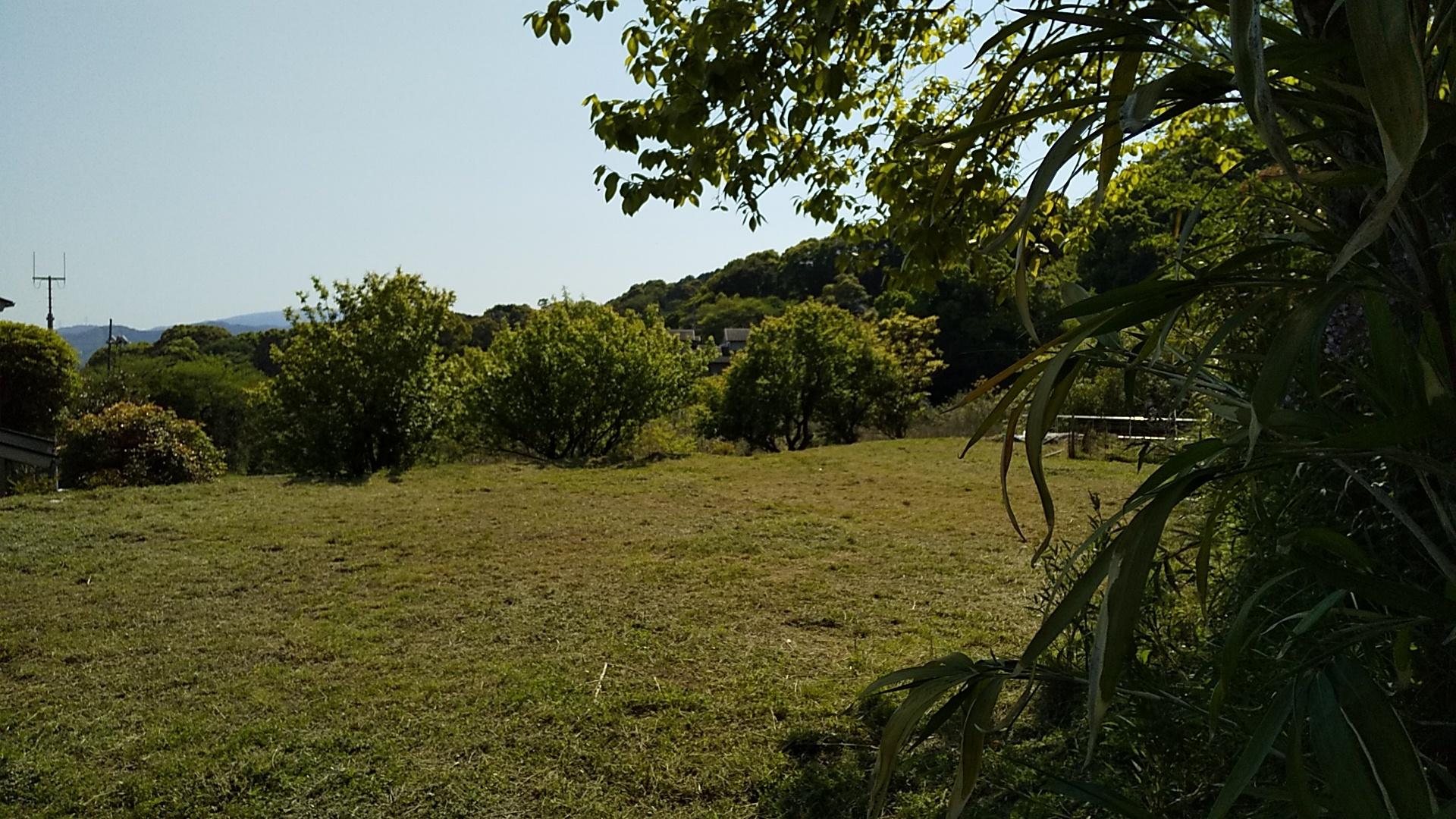 裏庭からの風景