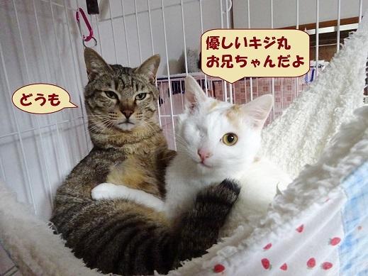 ビー玉・キジ丸1