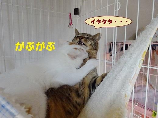 ビー玉・キジ丸5