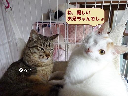 ビー玉・キジ丸6