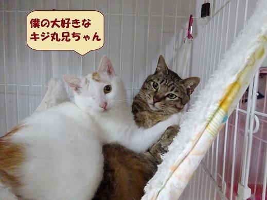ビー玉・キジ丸