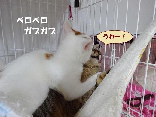 ビー玉・キジ丸3