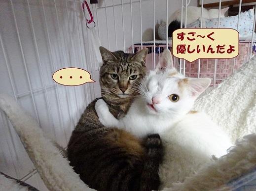 ビー玉・キジ丸2