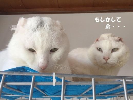 ホワ・大福2