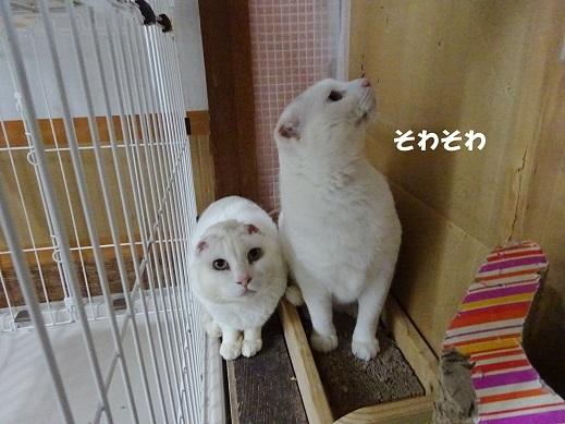 大福・ホワ3
