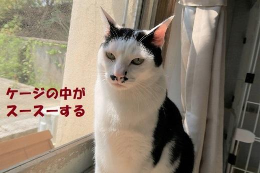 ちょび丸1 (1)