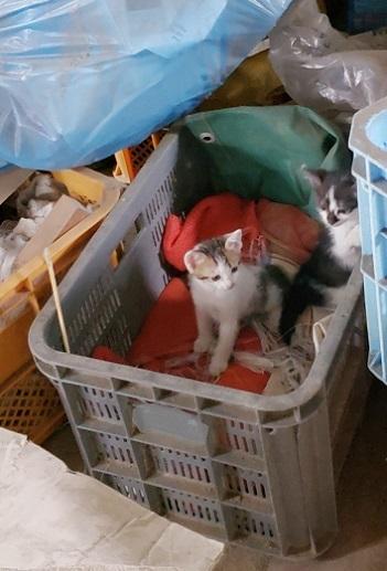 子猫1 (1)