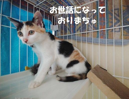 カムチキ2 (1)