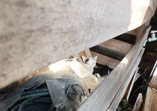 母猫クルム・ハヌル2