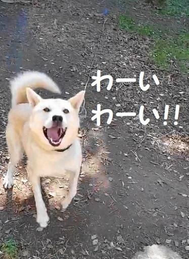 たいく 動画(1)