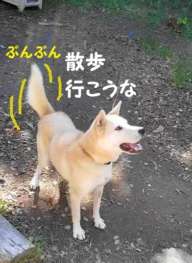たいく 動画(4)