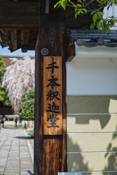 2020_sakura_kyoto_19.jpg