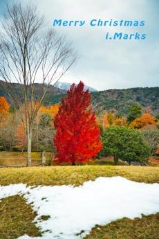 Red_Christmas_tree_1.jpg