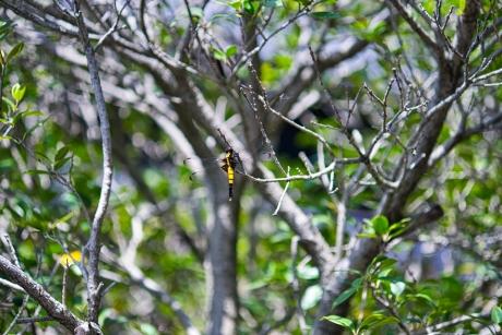 dragonfly_2.jpg
