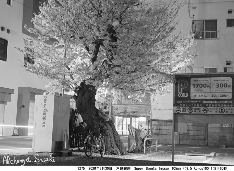 夜桜1275-6