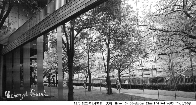 大崎・目黒川の桜1276-44a