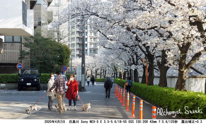 目黒川DSC05479