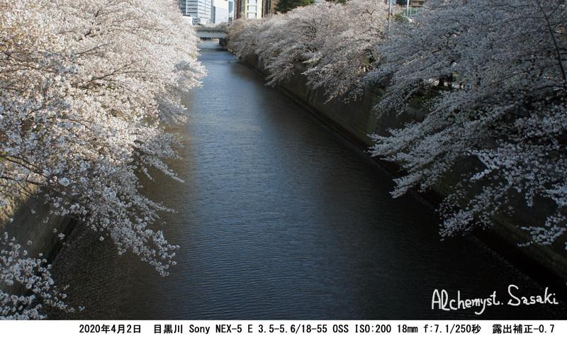 目黒川DSC05450
