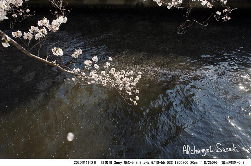 目黒川DSC05457