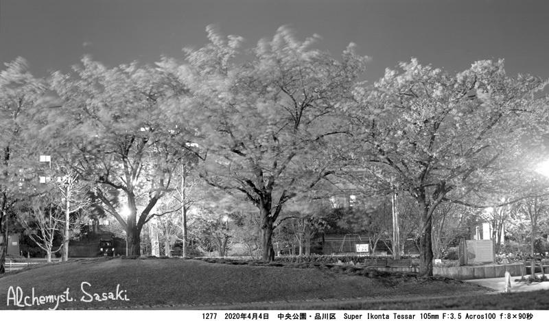 夜桜1277-8