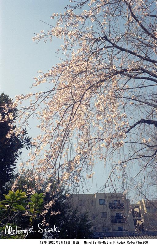 春の墓参り1279-5