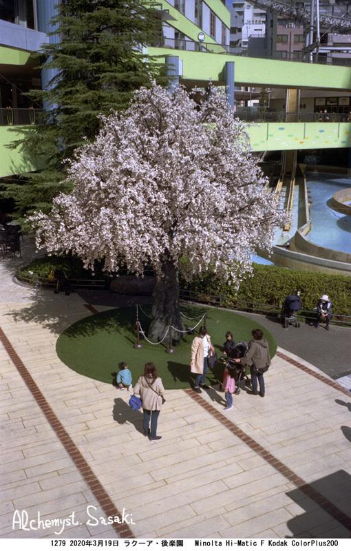 春の墓参り1279-9