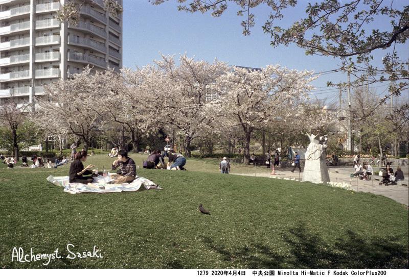 中央公園の桜1279-34