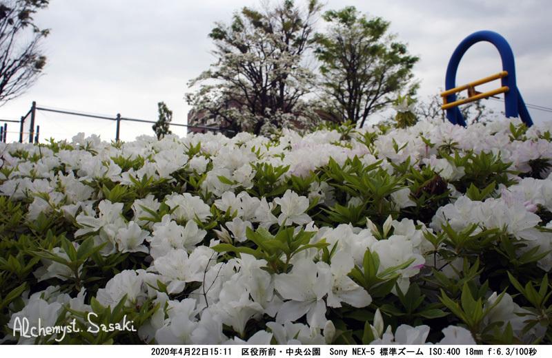 中央公園DSC06040