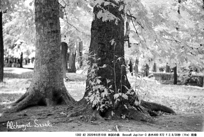 林試の森1302#2-15