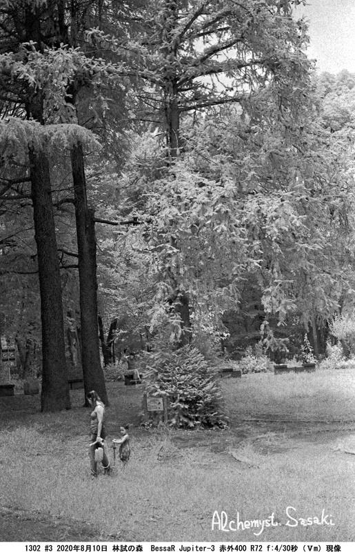 林試の森1302#3-6a