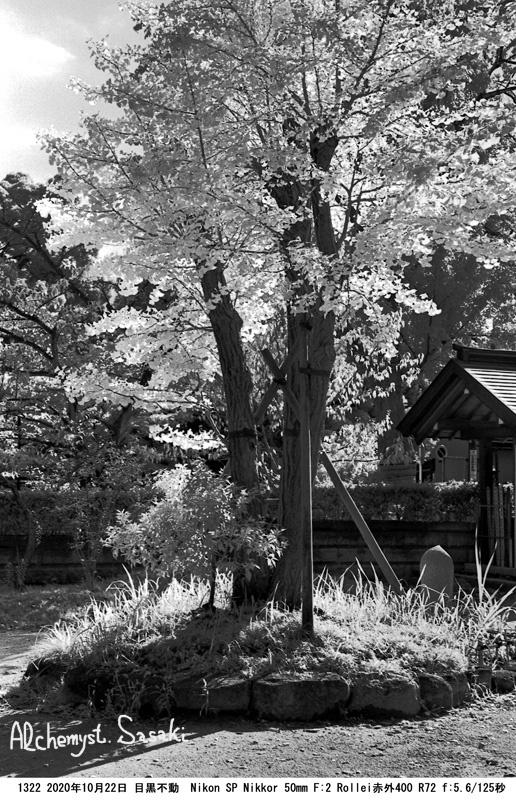 桐ヶ谷散歩1322-20