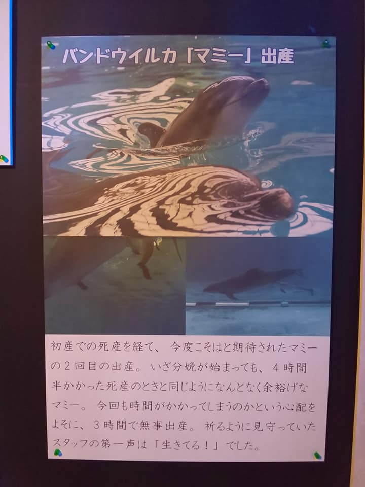 20200301sumasui52.jpg