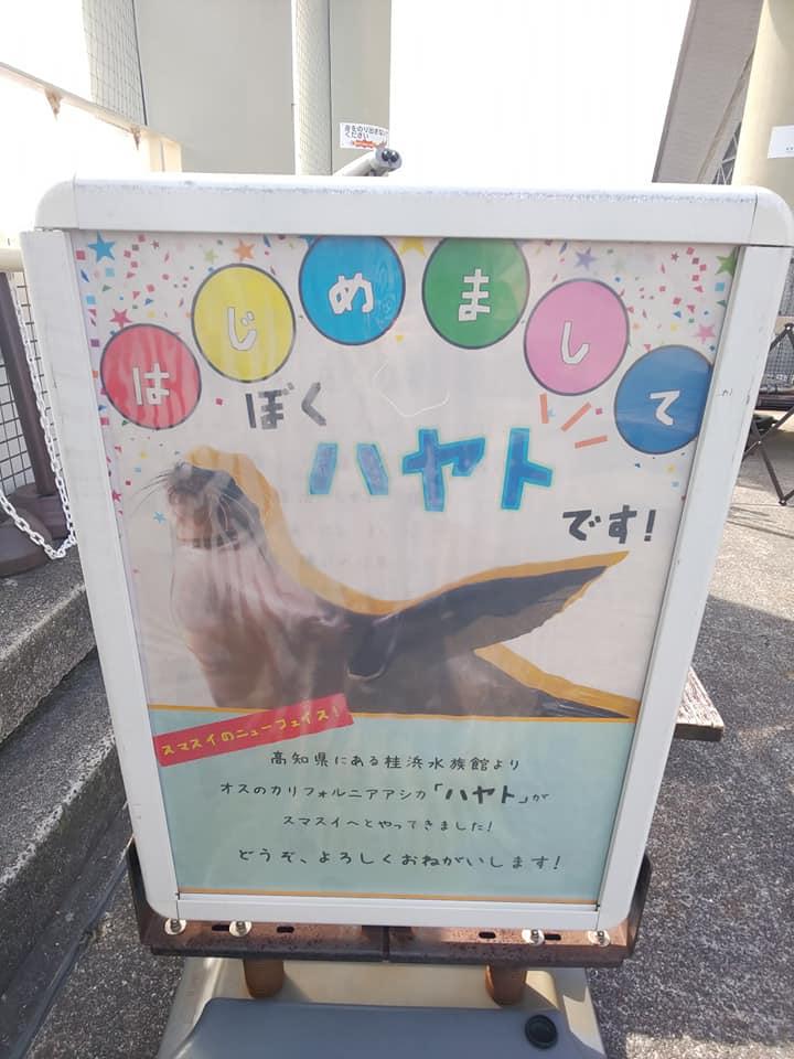 20200301sumasui56.jpg