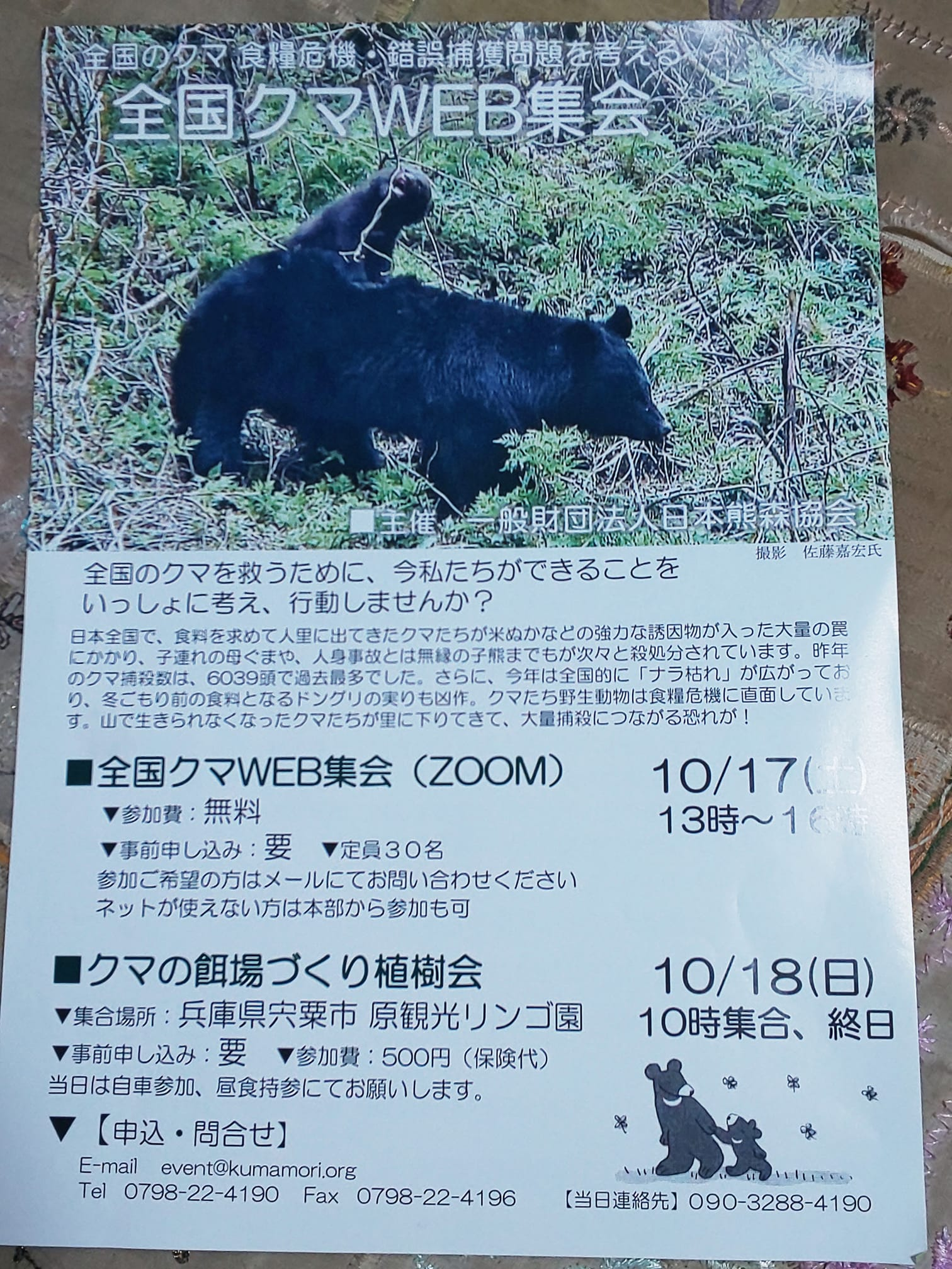 KUMAMORI5D.jpg