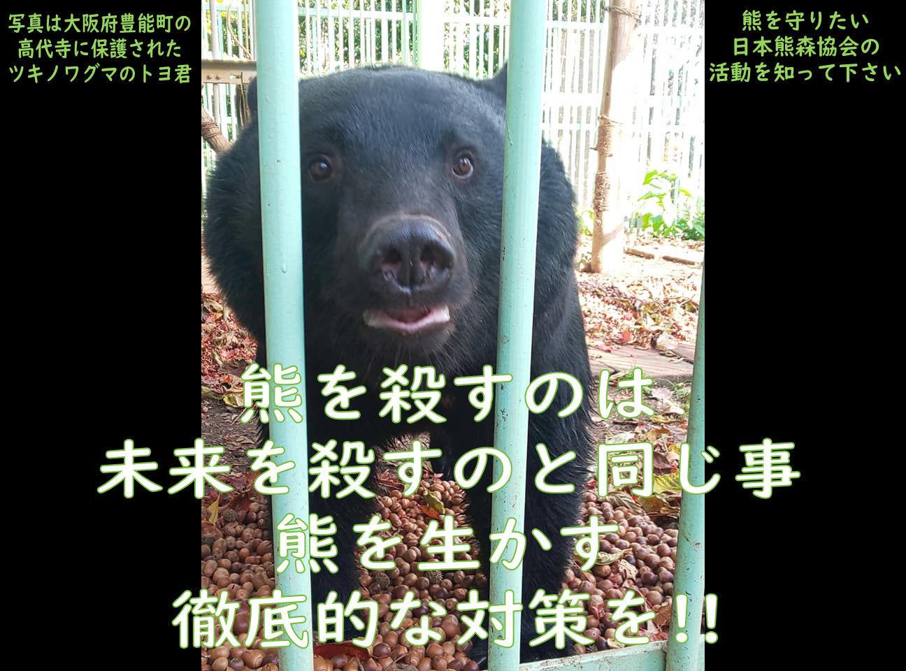TOYO20201117A.jpg