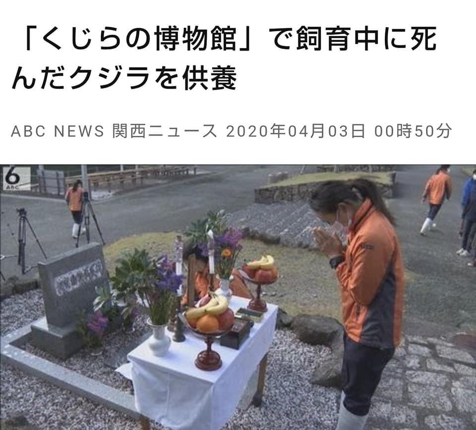 kujiragisei2020news1.jpg