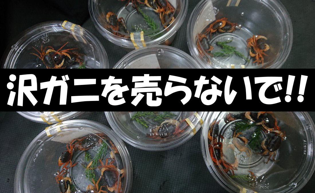 sawagani2.jpg