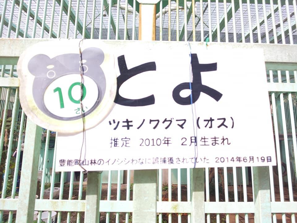 toyoB11.jpg