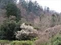 白梅咲く森