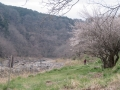 梅の道と青葉山