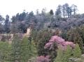 城下の桜咲く