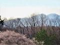 泉ヶ岳と山桜